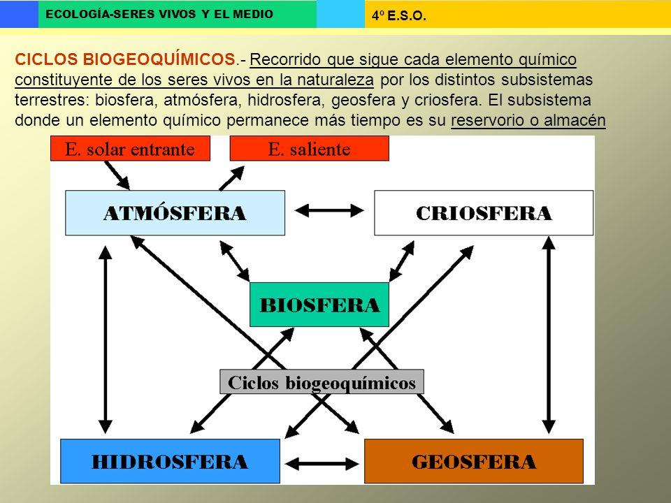 4º E.S.O. ECOLOGÍA-SERES VIVOS Y EL MEDIO CICLOS BIOGEOQUÍMICOS.- Recorrido que sigue cada elemento químico constituyente de los seres vivos en la nat