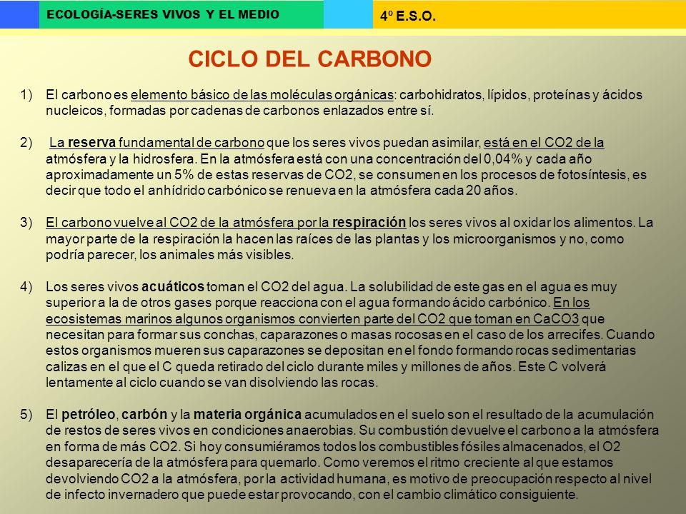 4º E.S.O. ECOLOGÍA-SERES VIVOS Y EL MEDIO 1)El carbono es elemento básico de las moléculas orgánicas: carbohidratos, lípidos, proteínas y ácidos nucle