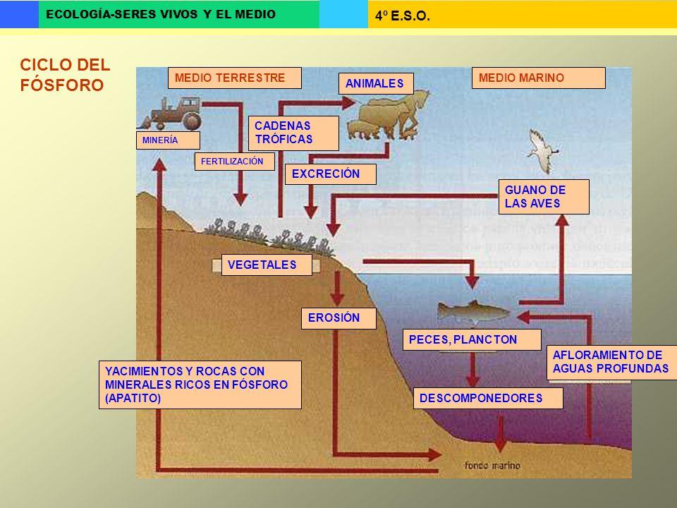4º E.S.O. ECOLOGÍA-SERES VIVOS Y EL MEDIO ANIMALES VEGETALES YACIMIENTOS Y ROCAS CON MINERALES RICOS EN FÓSFORO (APATITO) MEDIO TERRESTREMEDIO MARINO