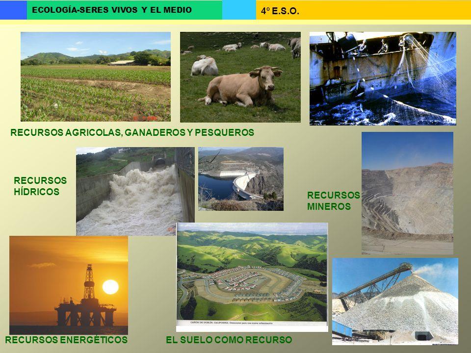 4º E.S.O. ECOLOGÍA-SERES VIVOS Y EL MEDIO RECURSOS AGRICOLAS, GANADEROS Y PESQUEROS RECURSOS HÍDRICOS RECURSOS MINEROS RECURSOS ENERGÉTICOSEL SUELO CO