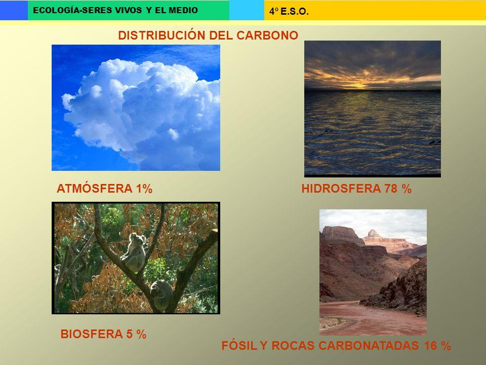 4º E.S.O. ECOLOGÍA-SERES VIVOS Y EL MEDIO DISTRIBUCIÓN DEL CARBONO ATMÓSFERA 1%HIDROSFERA 78 % BIOSFERA 5 % FÓSIL Y ROCAS CARBONATADAS 16 %
