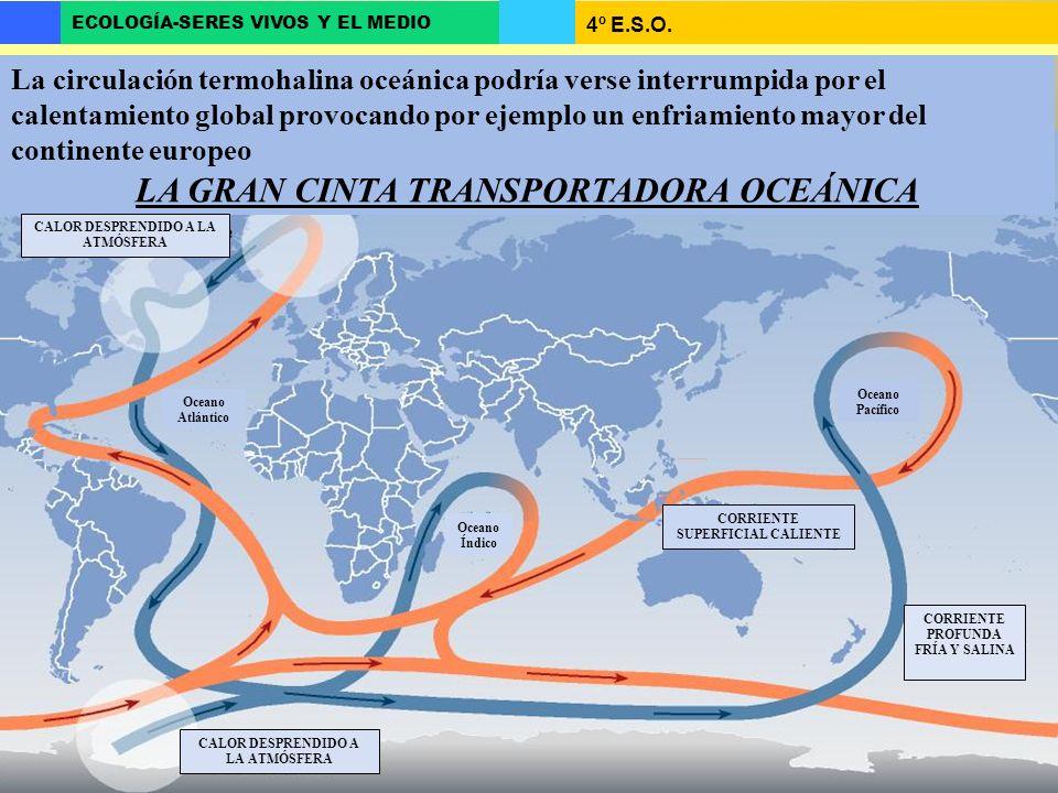 4º E.S.O. ECOLOGÍA-SERES VIVOS Y EL MEDIO LA GRAN CINTA TRANSPORTADORA OCEÁNICA CORRIENTE SUPERFICIAL CALIENTE CALOR DESPRENDIDO A LA ATMÓSFERA La cir
