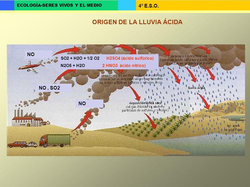 4º E.S.O. ECOLOGÍA-SERES VIVOS Y EL MEDIO ORIGEN DE LA LLUVIA ÁCIDA NO NO, SO2 NO SO2 + H2O + 1/2 O2 H2SO4 (ácido sulfúrico) N2O5 + H2O 2 HNO3 ácido n