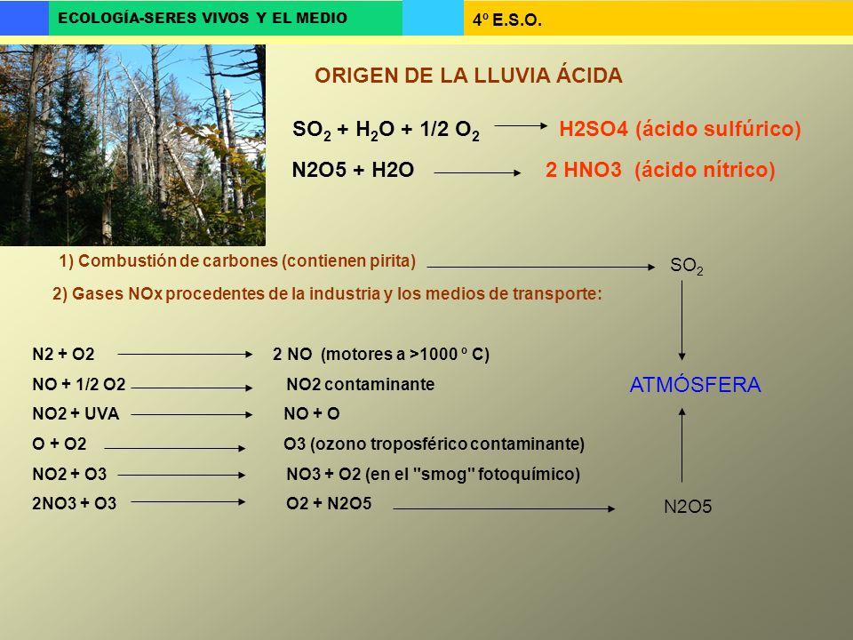 4º E.S.O. ECOLOGÍA-SERES VIVOS Y EL MEDIO 1) Combustión de carbones (contienen pirita) SO 2 SO 2 + H 2 O + 1/2 O 2 H2SO4 (ácido sulfúrico) N2 + O2 2 N