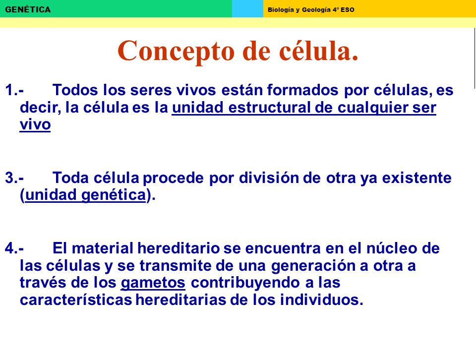Biología y Geología 4º ESO GENÉTICA Concepto de célula. 1.-Todos los seres vivos están formados por células, es decir, la célula es la unidad estructu