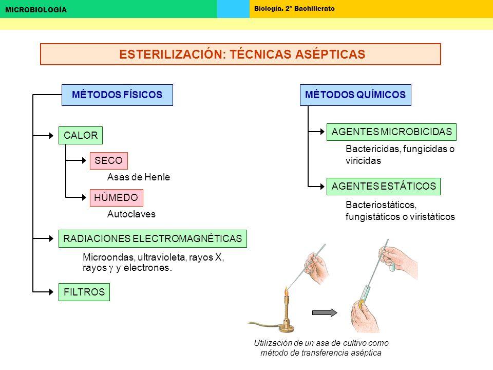 Biología. 2º Bachillerato MICROBIOLOGÍA MÉTODOS FÍSICOS RADIACIONES ELECTROMAGNÉTICAS FILTROS SECO HÚMEDO CALOR Asas de Henle Autoclaves Microondas, u