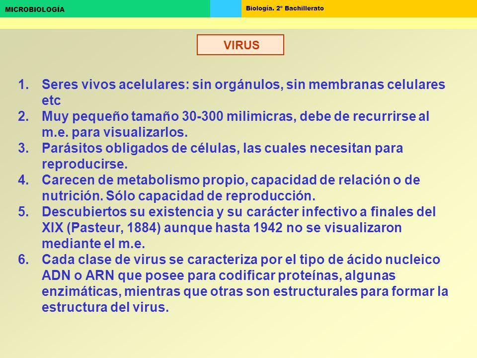 Biología. 2º Bachillerato MICROBIOLOGÍA VIRUS 1.Seres vivos acelulares: sin orgánulos, sin membranas celulares etc 2.Muy pequeño tamaño 30-300 milimic