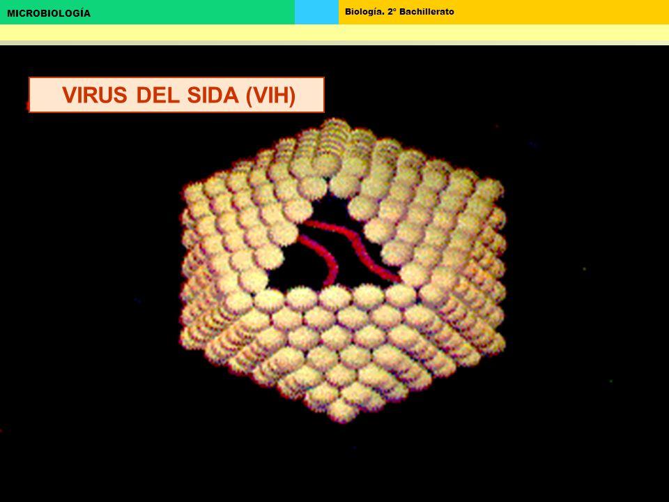 Biología. 2º Bachillerato MICROBIOLOGÍA VIRUS DEL SIDA (VIH)