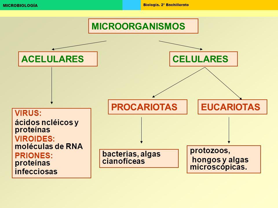 Biología. 2º Bachillerato MICROBIOLOGÍA CELULARESACELULARES bacterias, algas cianofíceas VIRUS: ácidos ncléicos y proteínas VIROIDES: moléculas de RNA