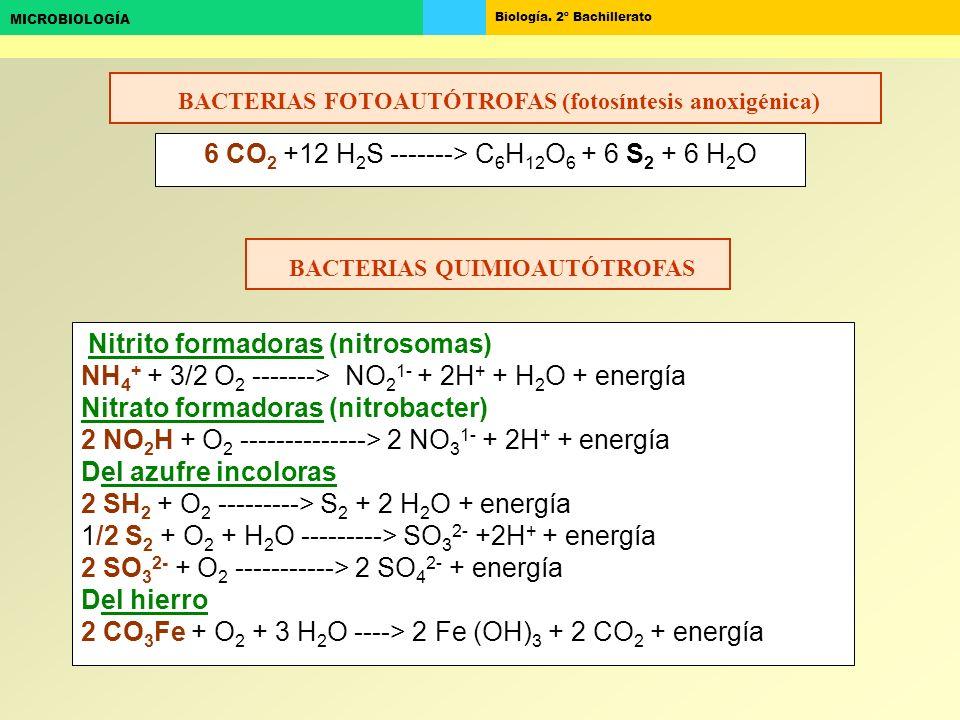 Biología. 2º Bachillerato MICROBIOLOGÍA BACTERIAS FOTOAUTÓTROFAS (fotosíntesis anoxigénica) 6 CO 2 +12 H 2 S -------> C 6 H 12 O 6 + 6 S 2 + 6 H 2 O N