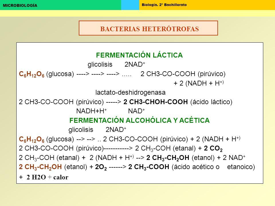 Biología. 2º Bachillerato MICROBIOLOGÍA FERMENTACIÓN LÁCTICA glicolisis 2NAD + C 6 H 12 O 6 (glucosa) ----> ----> ---->..... 2 CH3-CO-COOH (pirúvico)
