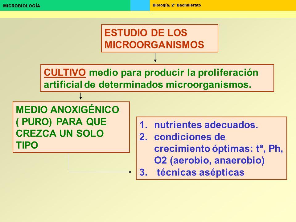 Biología. 2º Bachillerato MICROBIOLOGÍA ESTUDIO DE LOS MICROORGANISMOS CULTIVO medio para producir la proliferación artificial de determinados microor