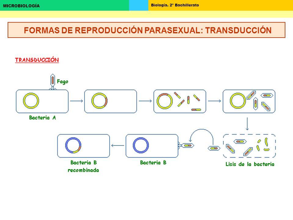 Biología. 2º Bachillerato MICROBIOLOGÍA FORMAS DE REPRODUCCIÓN PARASEXUAL: TRANSDUCCIÓN