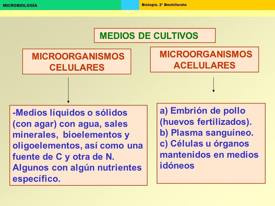 Biología. 2º Bachillerato MICROBIOLOGÍA MICROORGANISMOS CELULARES MICROORGANISMOS ACELULARES MEDIOS DE CULTIVOS a) Embrión de pollo (huevos fertilizad