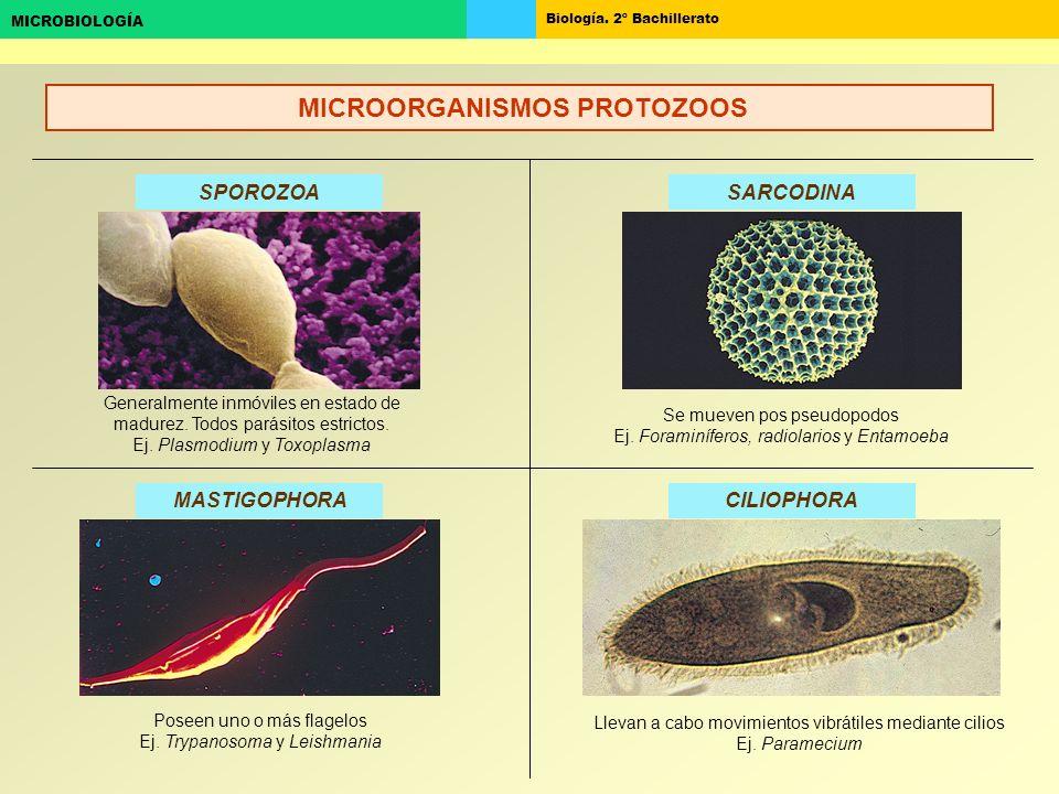 Biología. 2º Bachillerato MICROBIOLOGÍA SPOROZOASARCODINA CILIOPHORAMASTIGOPHORA Generalmente inmóviles en estado de madurez. Todos parásitos estricto