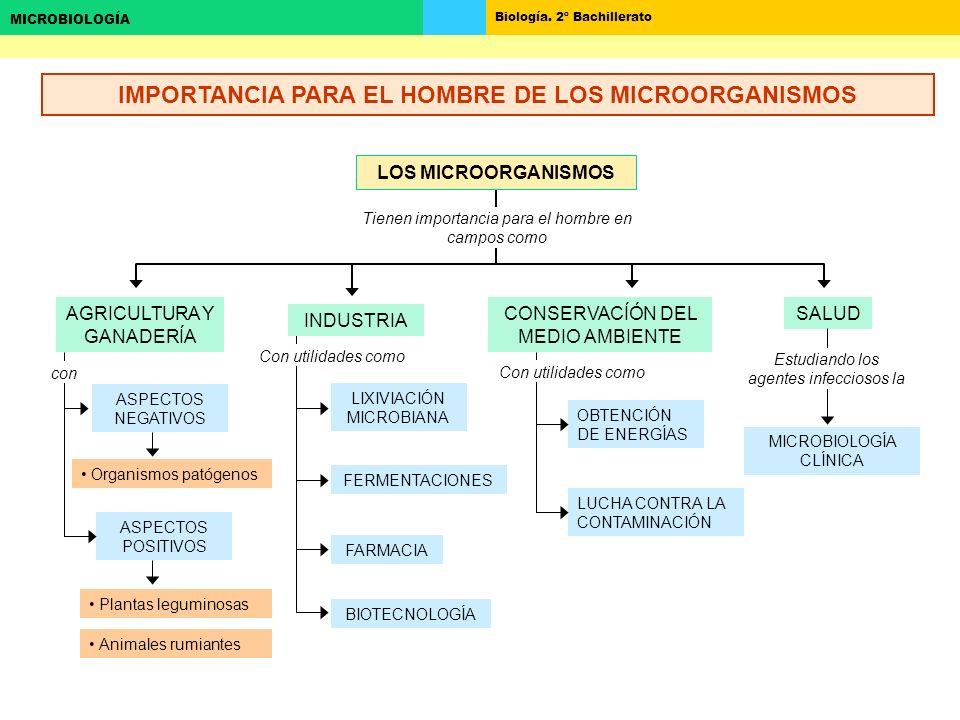 Biología. 2º Bachillerato MICROBIOLOGÍA AGRICULTURA Y GANADERÍA ASPECTOS NEGATIVOS ASPECTOS POSITIVOS LIXIVIACIÓN MICROBIANA FERMENTACIONES FARMACIA B