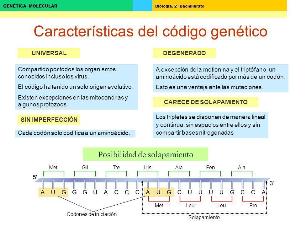 Biología. 2º Bachillerato GENÉTICA MOLECULAR Características del código genético UNIVERSAL Compartido por todos los organismos conocidos incluso los v