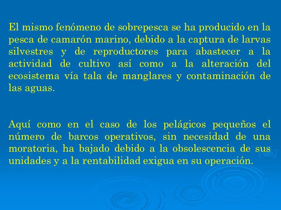 El mismo fenómeno de sobrepesca se ha producido en la pesca de camarón marino, debido a la captura de larvas silvestres y de reproductores para abaste
