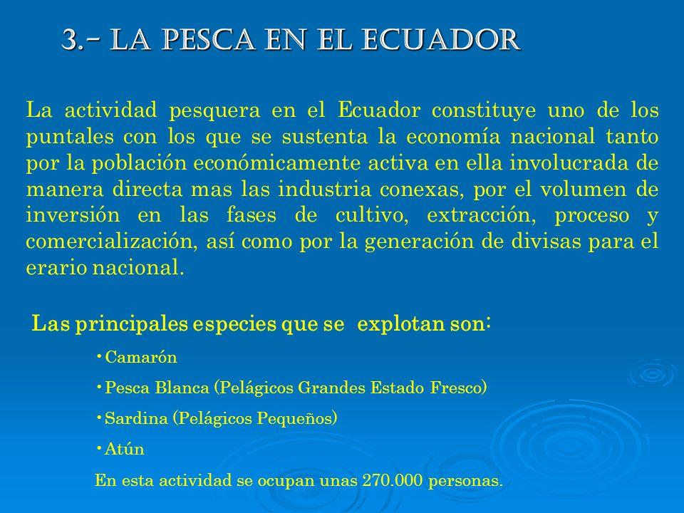 3.- LA PESCA EN EL ECUADOR La actividad pesquera en el Ecuador constituye uno de los puntales con los que se sustenta la economía nacional tanto por l