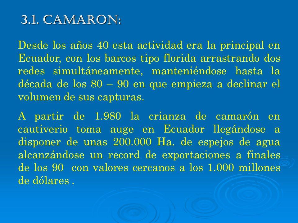 3.1. CAMARON: Desde los años 40 esta actividad era la principal en Ecuador, con los barcos tipo florida arrastrando dos redes simultáneamente, manteni