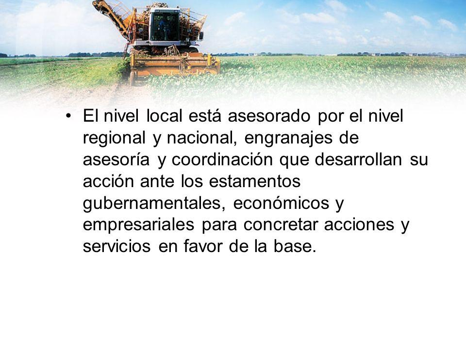El nivel local está asesorado por el nivel regional y nacional, engranajes de asesoría y coordinación que desarrollan su acción ante los estamentos gu