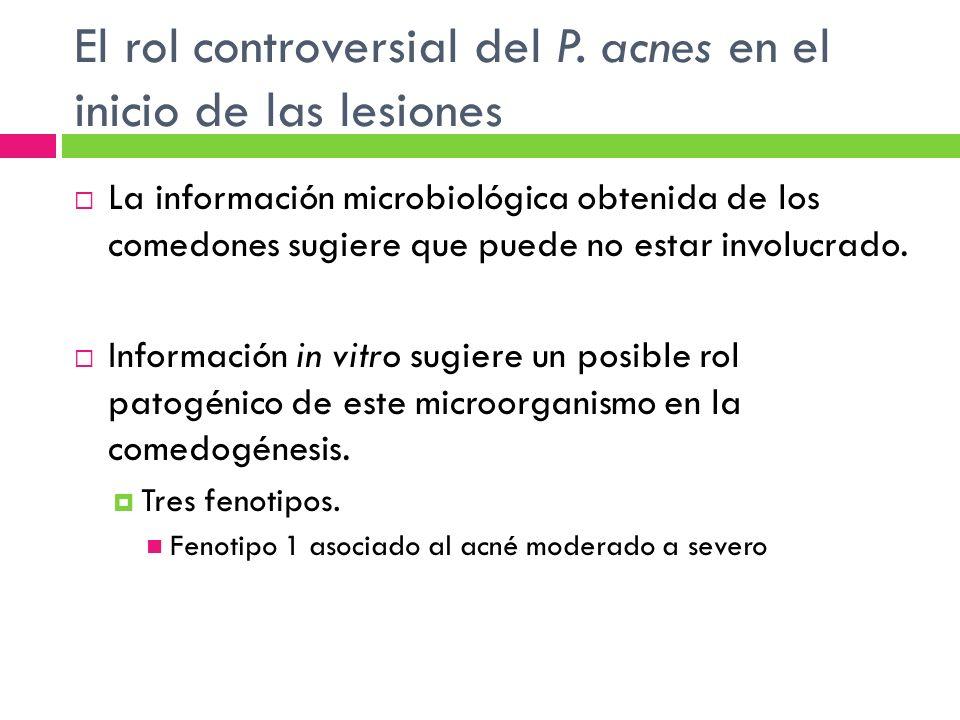 El rol controversial del P. acnes en el inicio de las lesiones La información microbiológica obtenida de los comedones sugiere que puede no estar invo