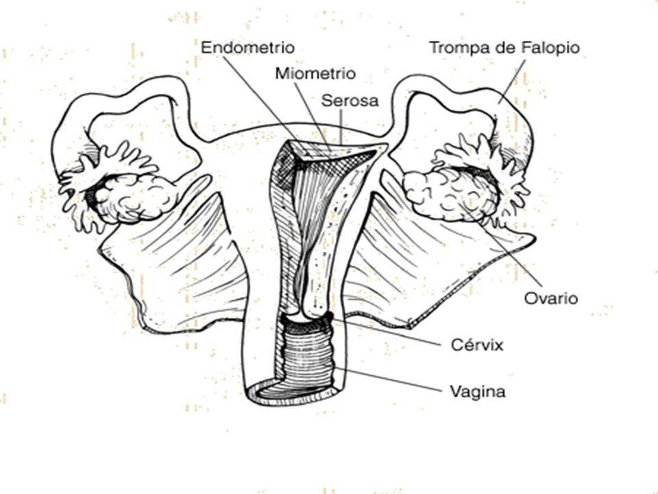 6) Por Dilatación y Curetaje