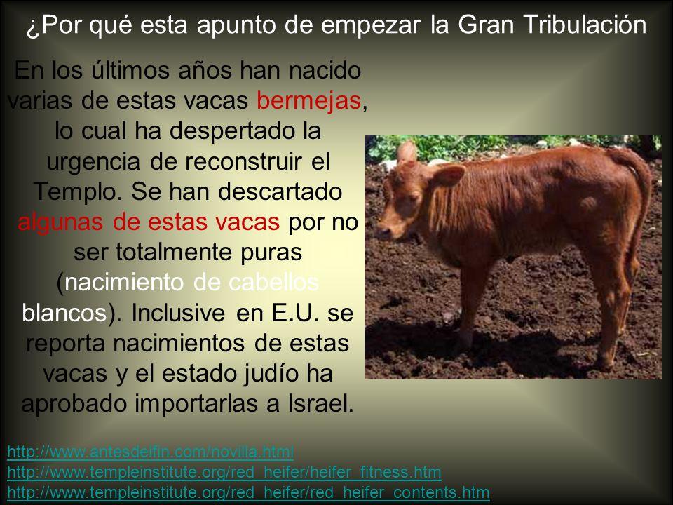 ¿Por qué esta apunto de empezar la Gran Tribulación En los últimos años han nacido varias de estas vacas bermejas, lo cual ha despertado la urgencia d