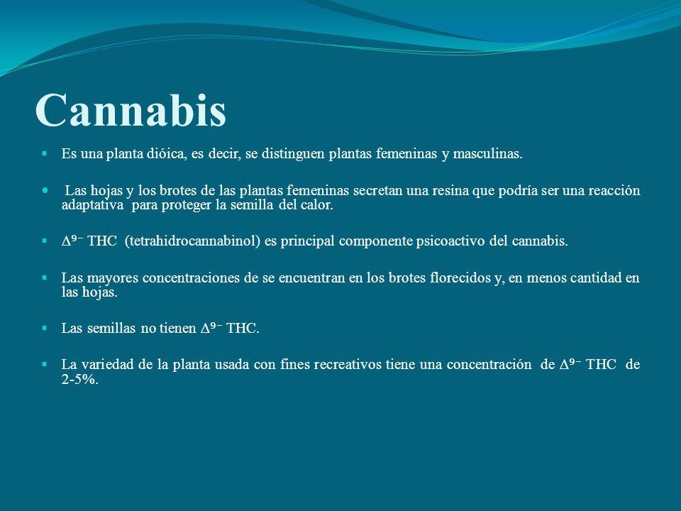 Cannabis Es una planta dióica, es decir, se distinguen plantas femeninas y masculinas. Las hojas y los brotes de las plantas femeninas secretan una re