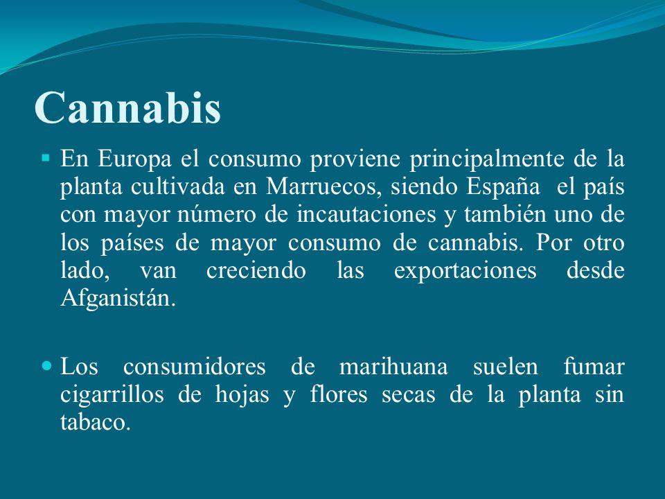 Cannabis En Europa el consumo proviene principalmente de la planta cultivada en Marruecos, siendo España el país con mayor número de incautaciones y t