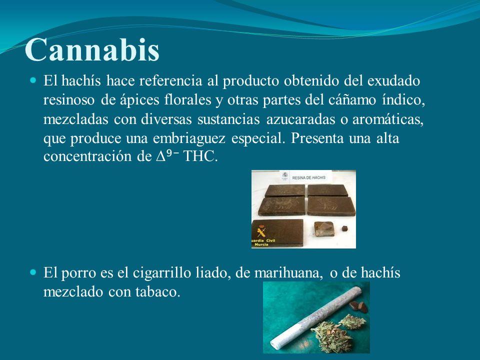 Cannabis El hachís hace referencia al producto obtenido del exudado resinoso de ápices florales y otras partes del cáñamo índico, mezcladas con divers