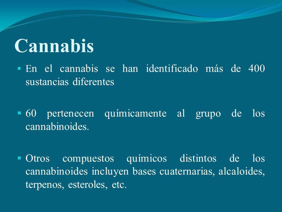 Cannabis E n el cannabis se han identificado más de 400 sustancias diferentes 60 pertenecen químicamente al grupo de los cannabinoides. Otros compuest
