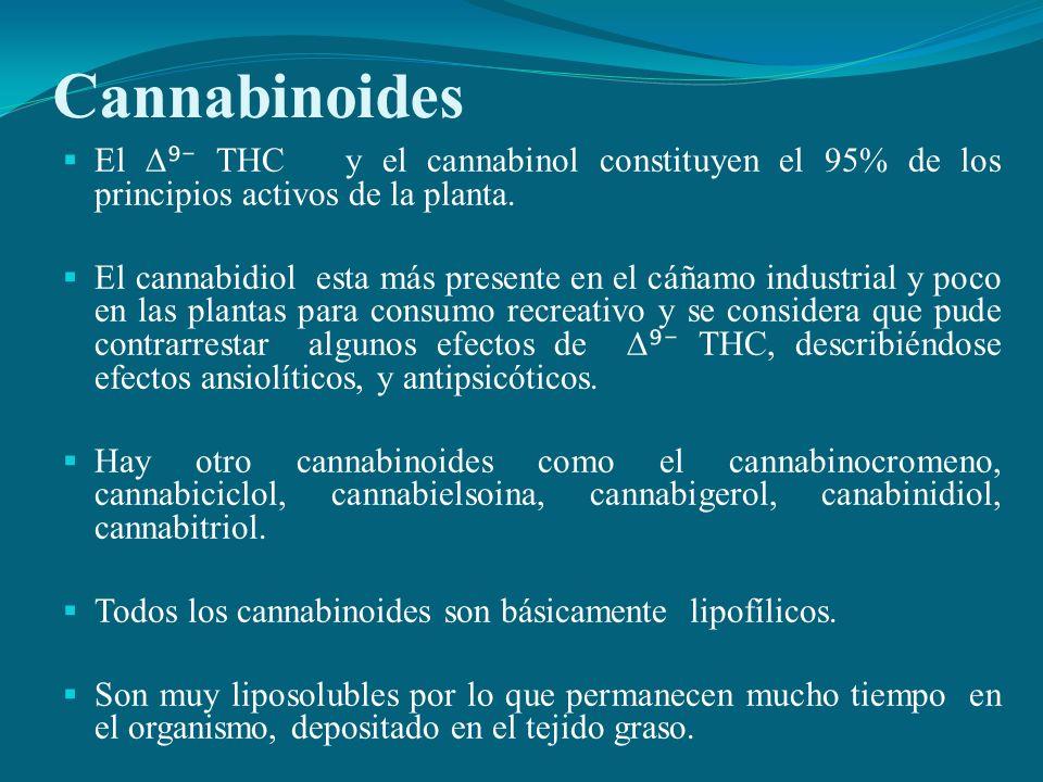 Cannabinoides El THC y el cannabinol constituyen el 95% de los principios activos de la planta. El cannabidiol esta más presente en el cáñamo industri