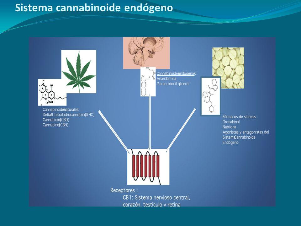 Sistema cannabinoide endógeno