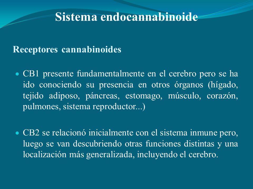 Receptores cannabinoides CB1 presente fundamentalmente en el cerebro pero se ha ido conociendo su presencia en otros órganos (hígado, tejido adiposo,