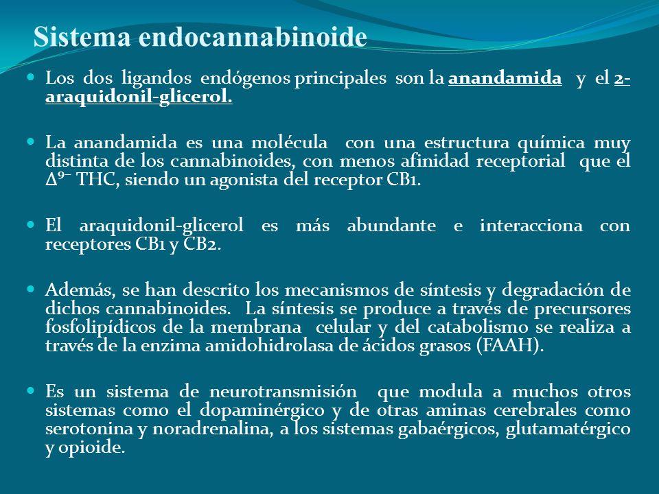 Sistema endocannabinoide Los dos ligandos endógenos principales son la anandamida y el 2- araquidonil-glicerol. La anandamida es una molécula con una