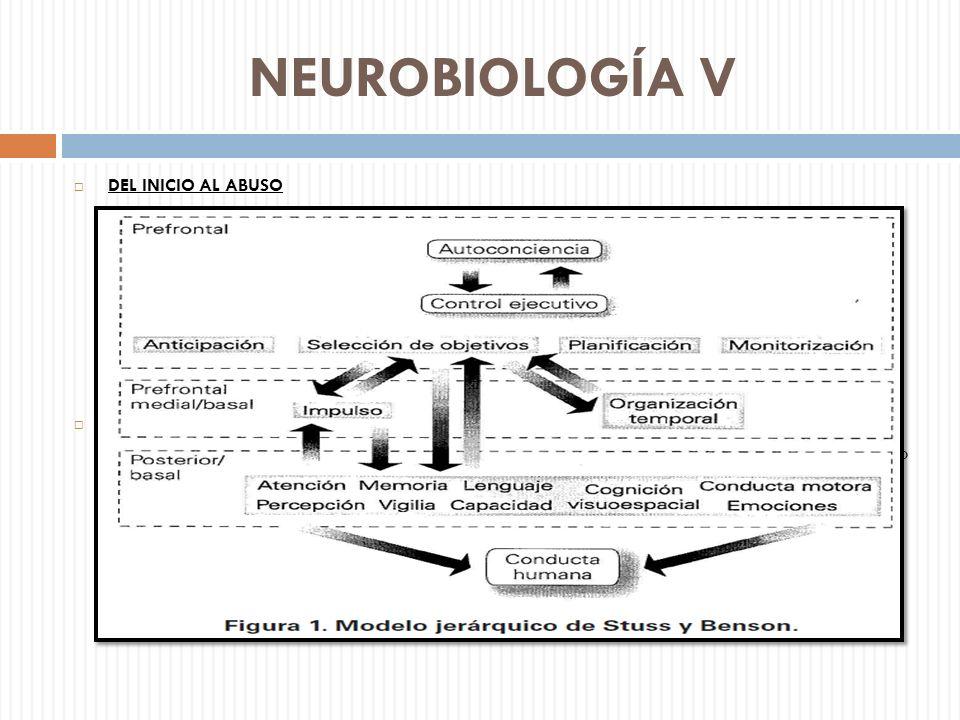 NEUROBIOLOGÍA V DEL INICIO AL ABUSO Formación de la memoria, mediante los sistemas de aprendizaje y memoria. Núcleos que regulan el condicionamiento c