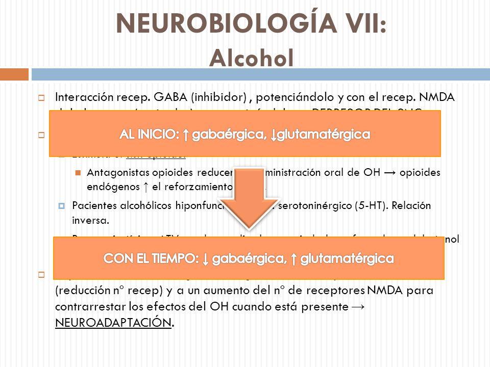 NEUROBIOLOGÍA VII: Alcohol Interacción recep. GABA (inhibidor), potenciándolo y con el recep. NMDA del glutamato (excitador), antagonizándolo DEPRESOR