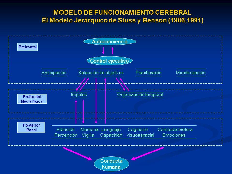 MODELO DE FUNCIONAMIENTO CEREBRAL El Modelo Jerárquico de Stuss y Benson (1986,1991) Autoconciencia Control ejecutivo Anticipación Selección de objeti