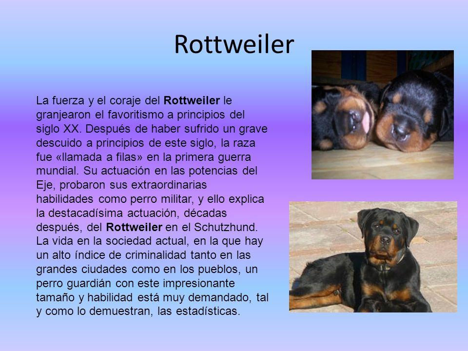 Rottweiler La fuerza y el coraje del Rottweiler le granjearon el favoritismo a principios del siglo XX. Después de haber sufrido un grave descuido a p