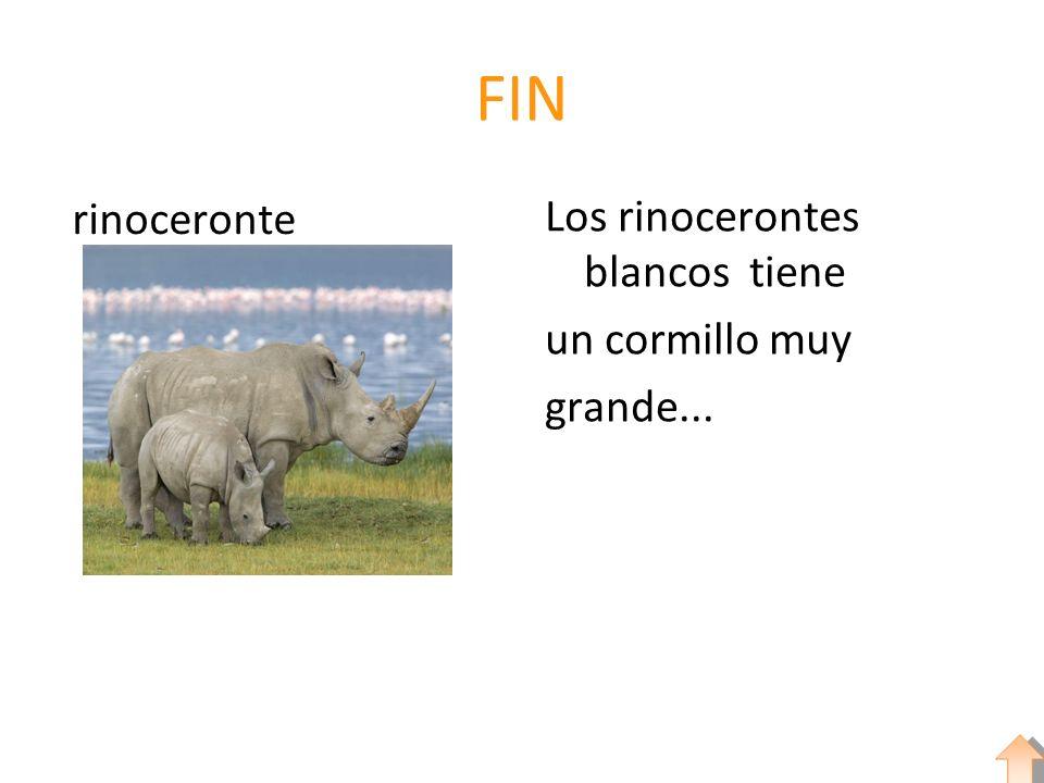 FIN rinoceronte Los rinocerontes blancos tiene un cormillo muy grande...