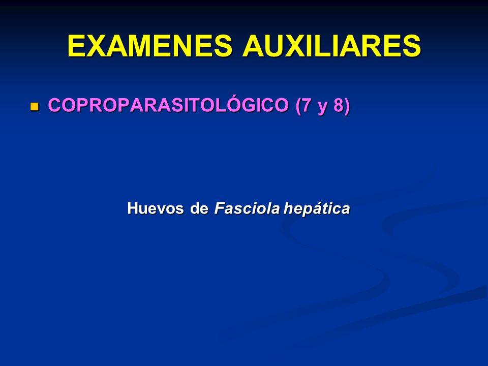 EXAMENES AUXILIARES COPROPARASITOLÓGICO (7 y 8) COPROPARASITOLÓGICO (7 y 8) Huevos de Fasciola hepática