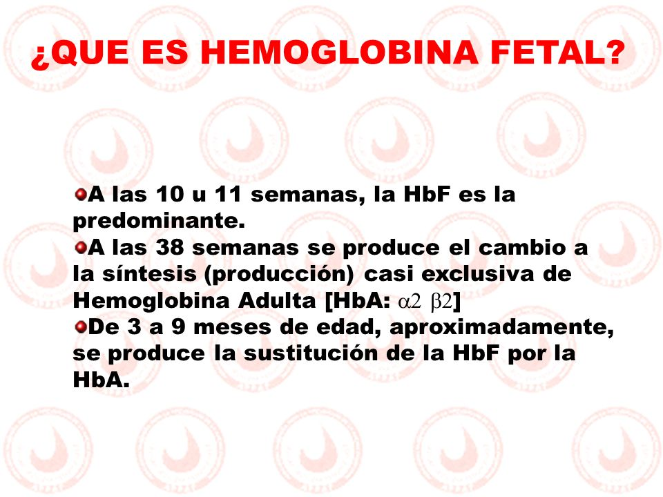 A las 10 u 11 semanas, la HbF es la predominante. A las 38 semanas se produce el cambio a la síntesis (producción) casi exclusiva de Hemoglobina Adult