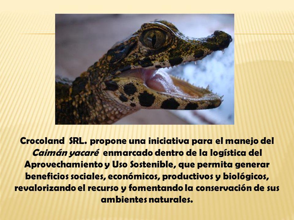 Crocoland SRL. propone una iniciativa para el manejo del Caimán yacaré enmarcado dentro de la logística del Aprovechamiento y Uso Sostenible, que perm