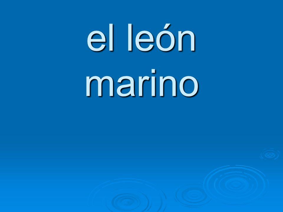 el león marino