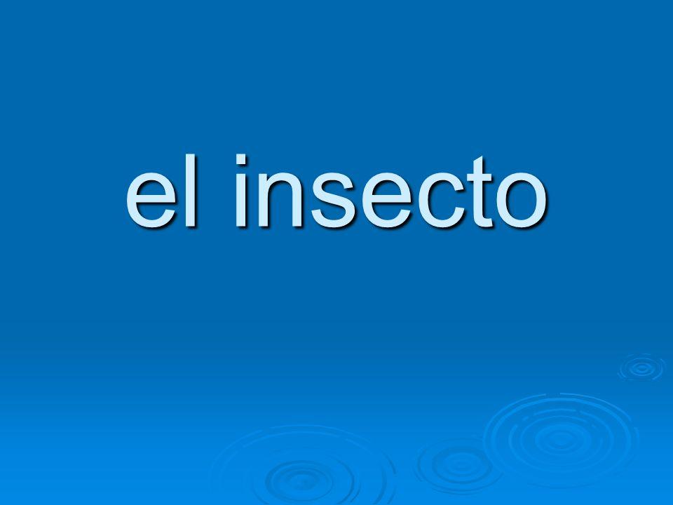 el insecto