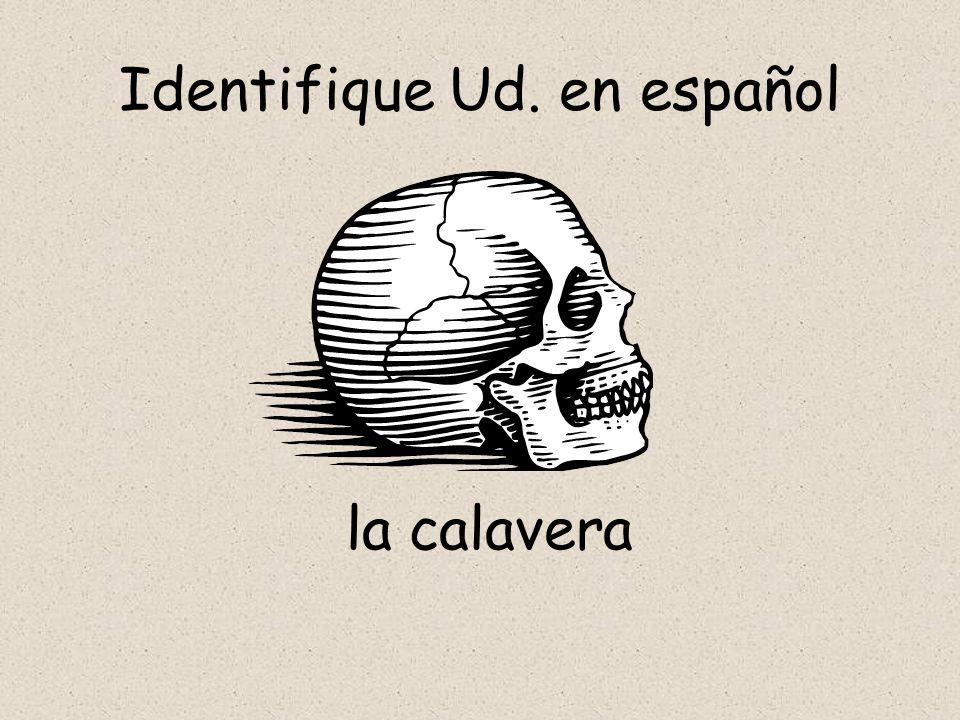 Identifique Ud. en español la calavera