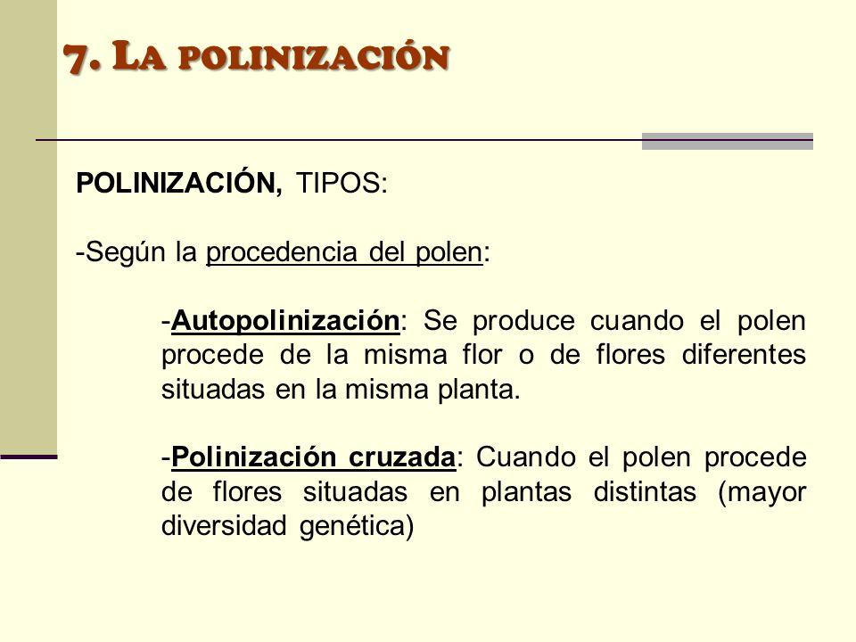 7. L A POLINIZACIÓN POLINIZACIÓN, TIPOS: -Según la procedencia del polen: -Autopolinización: Se produce cuando el polen procede de la misma flor o de
