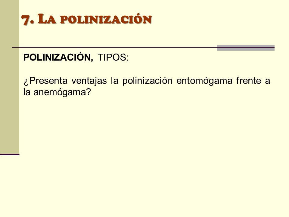 POLINIZACIÓN, TIPOS: ¿Presenta ventajas la polinización entomógama frente a la anemógama?