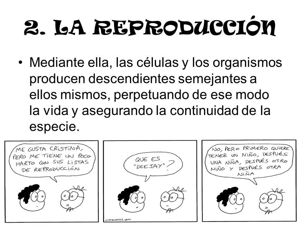 2. LA REPRODUCCIÓN Mediante ella, las células y los organismos producen descendientes semejantes a ellos mismos, perpetuando de ese modo la vida y ase